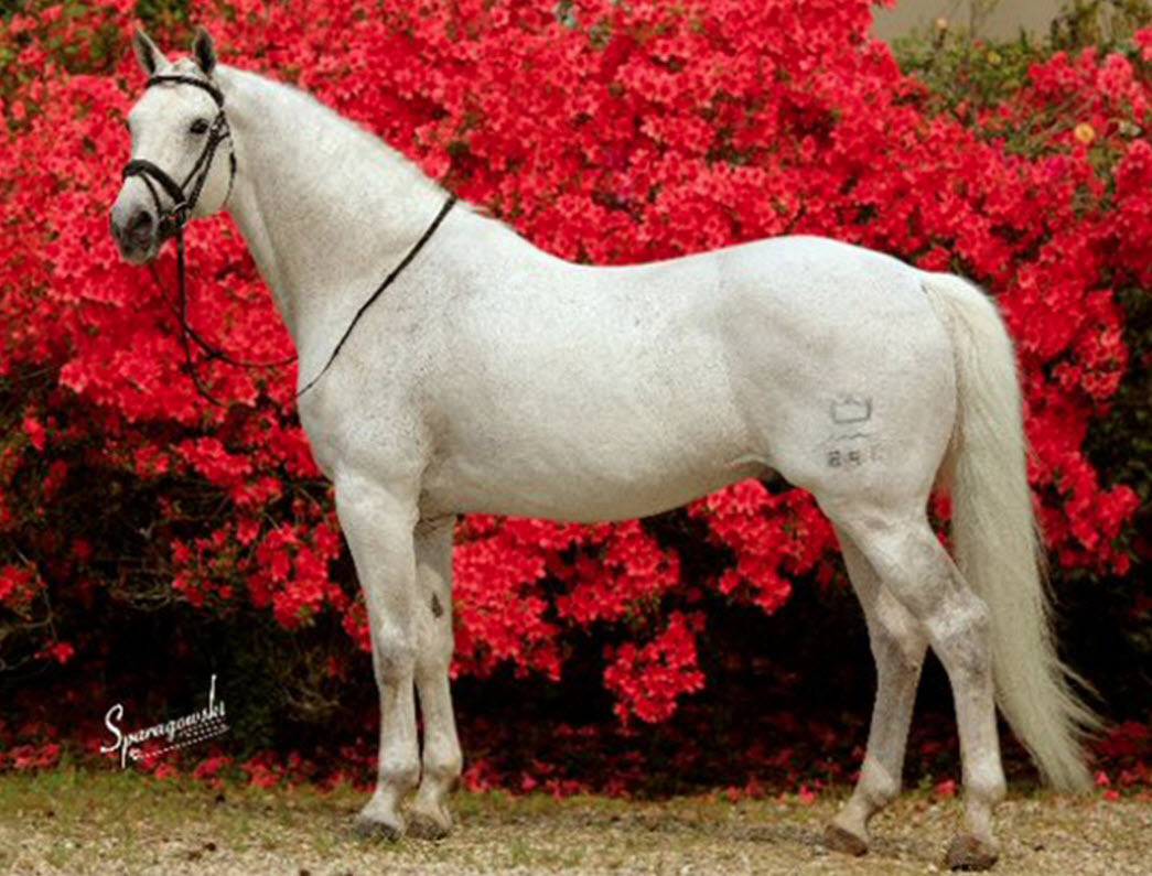 WhiteHorse-EquineSimplified-HorseManagementSoftware