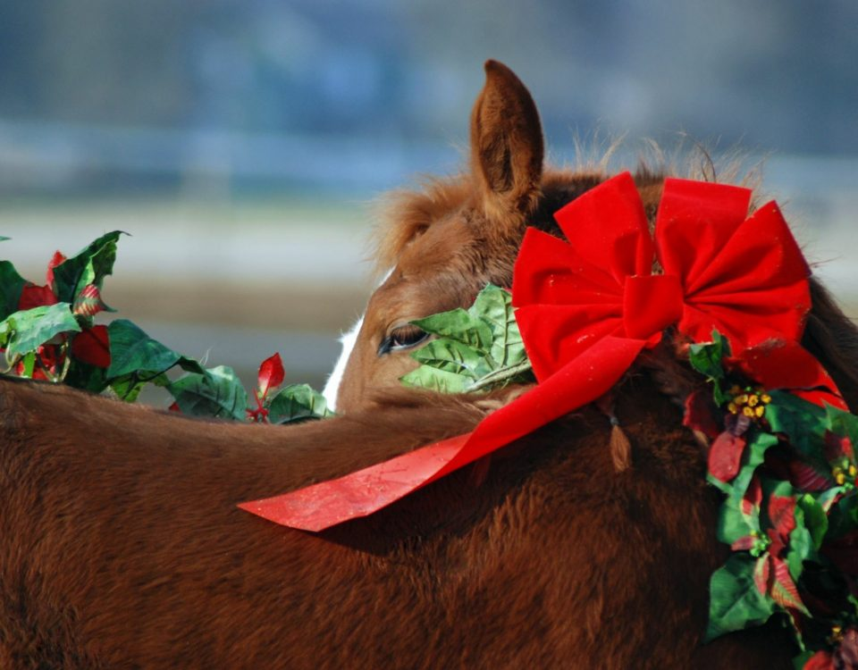 A Practical Gift For Horse Owners & Barn Managers - Horse with christmas decoration - Equine Simplified