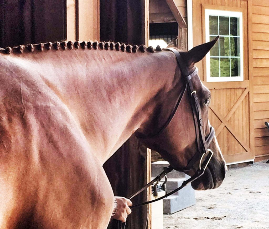 Horse Leaving The Barn - Equine Simplified - Horse Management App