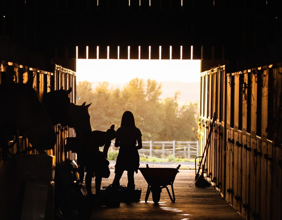 Girl inside a stable with horses - how much does it cost to own a horse - Equine Simplified