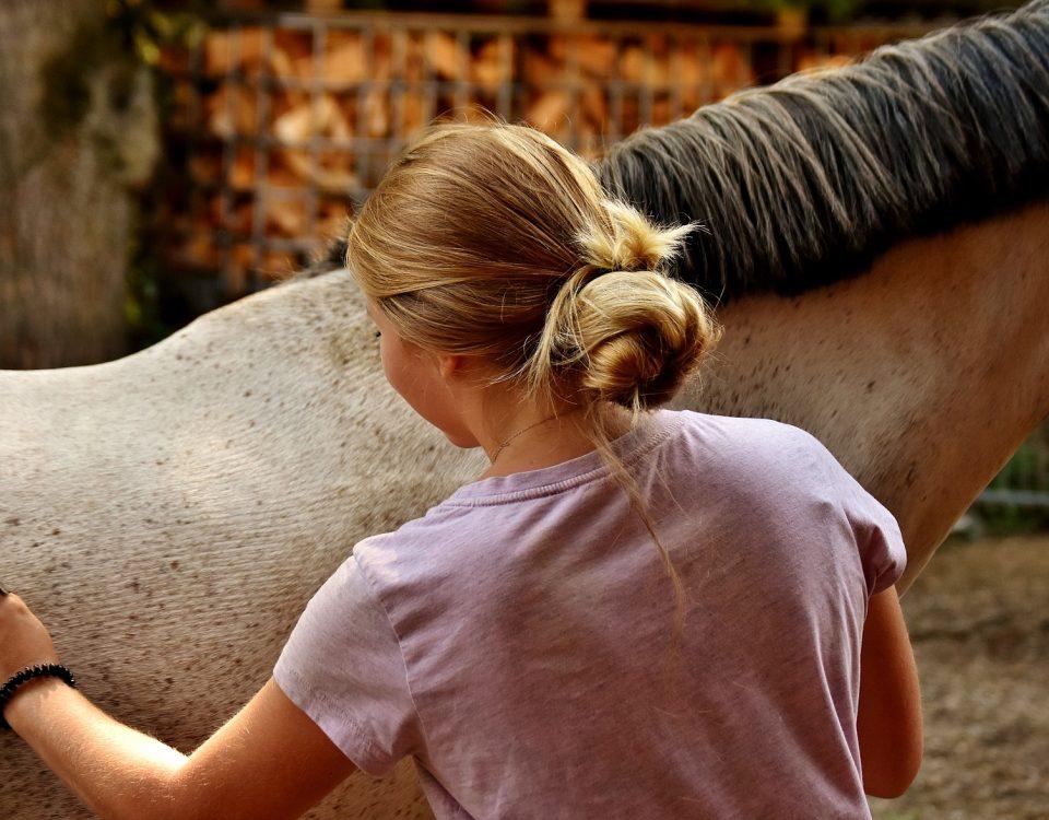 Haas Grooming Brushes - Girl Brushing Horse - Equine Simplified