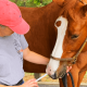 Giving Medicine To Horse - Lady Worming a horse - Equine Simplified