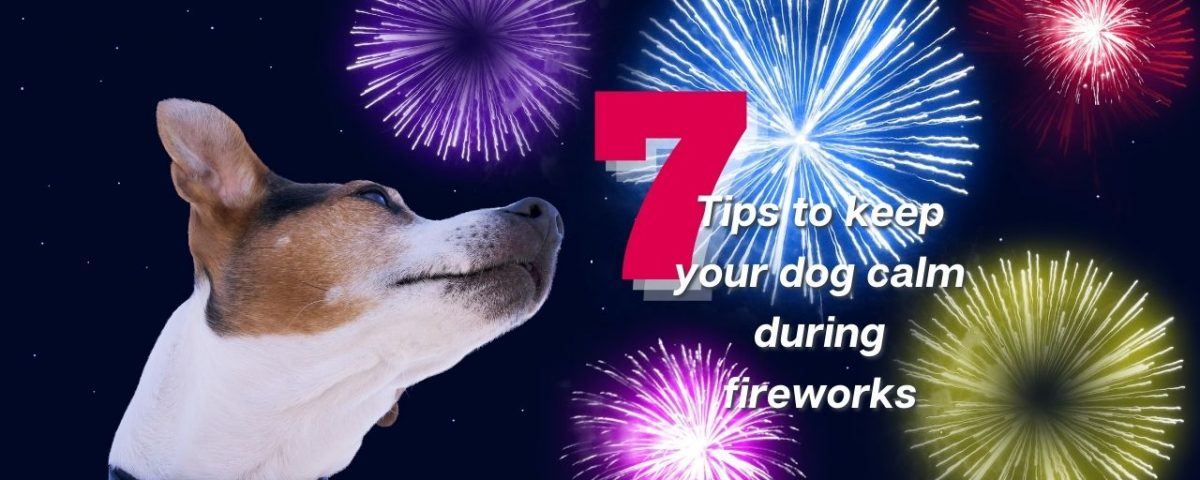 tips to keep your dog calm during fireworks